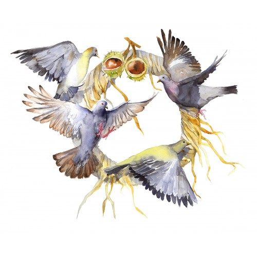 Pigeons society